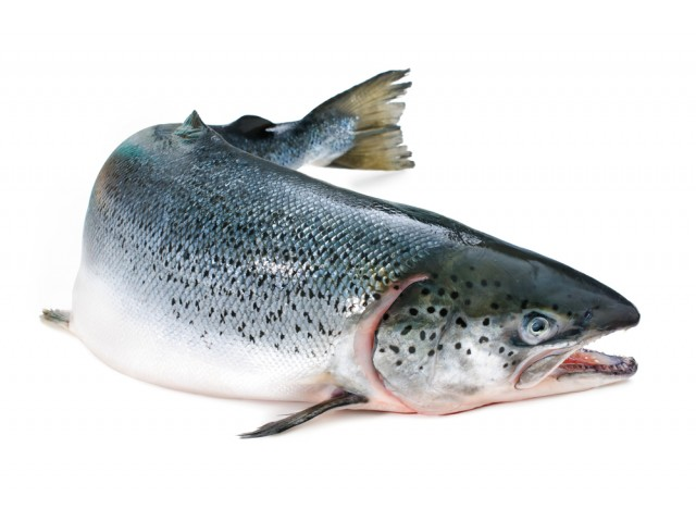 salmone_norvegia_intero